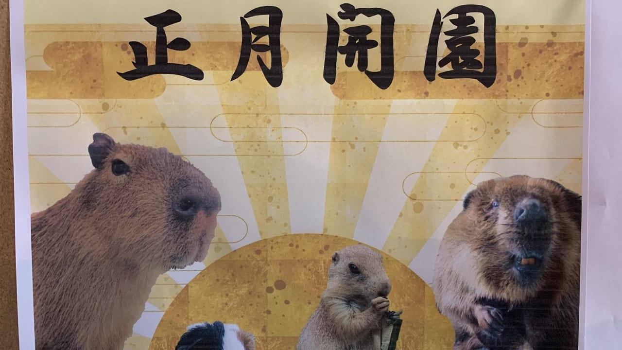 八木山動物公園正月開園